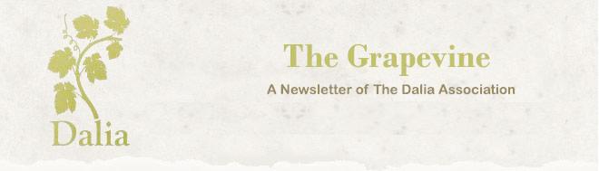 Dalia Newsletter Header Image